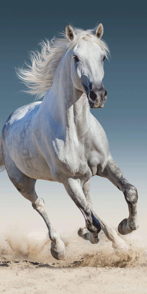 Krásna osuška biely kôň pre deti Jerry Fabrics